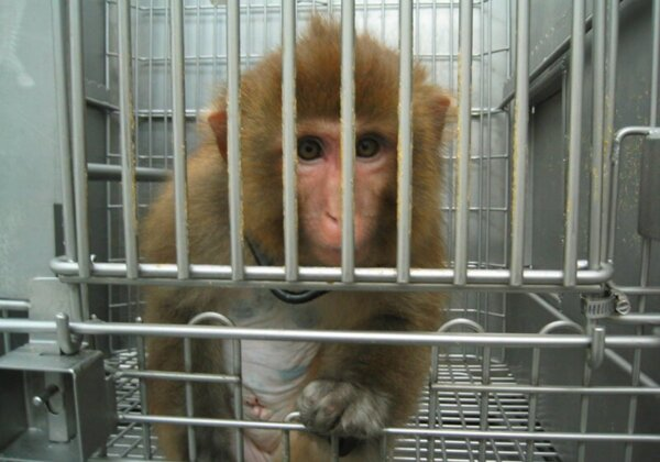 Urge the Australian Government to Mandate an End to All Experiments on Animals