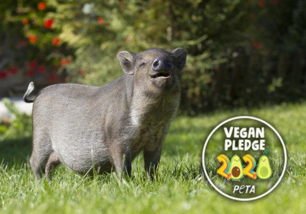 Go Vegan in January!