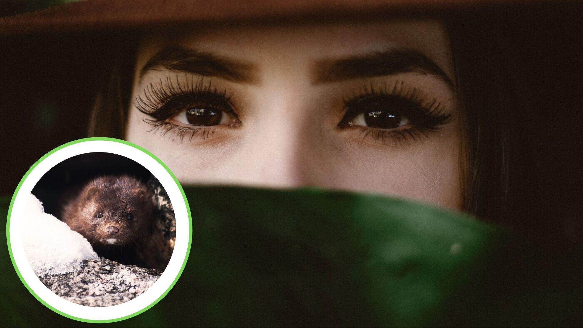 Victory! Velour Bans Mink-Fur Eyelashes After PETA Push