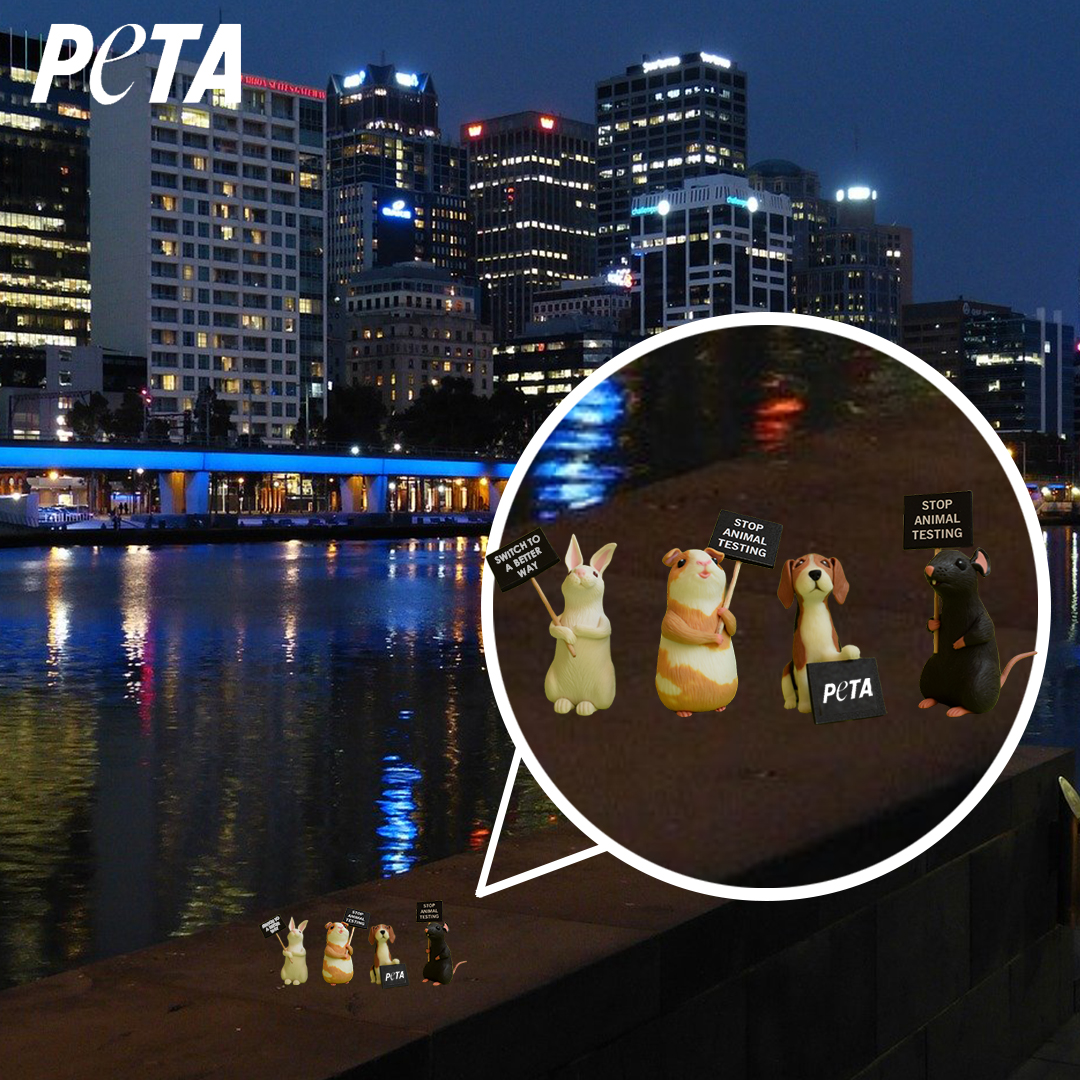Image shows small toy animals holding protest signs on city background.