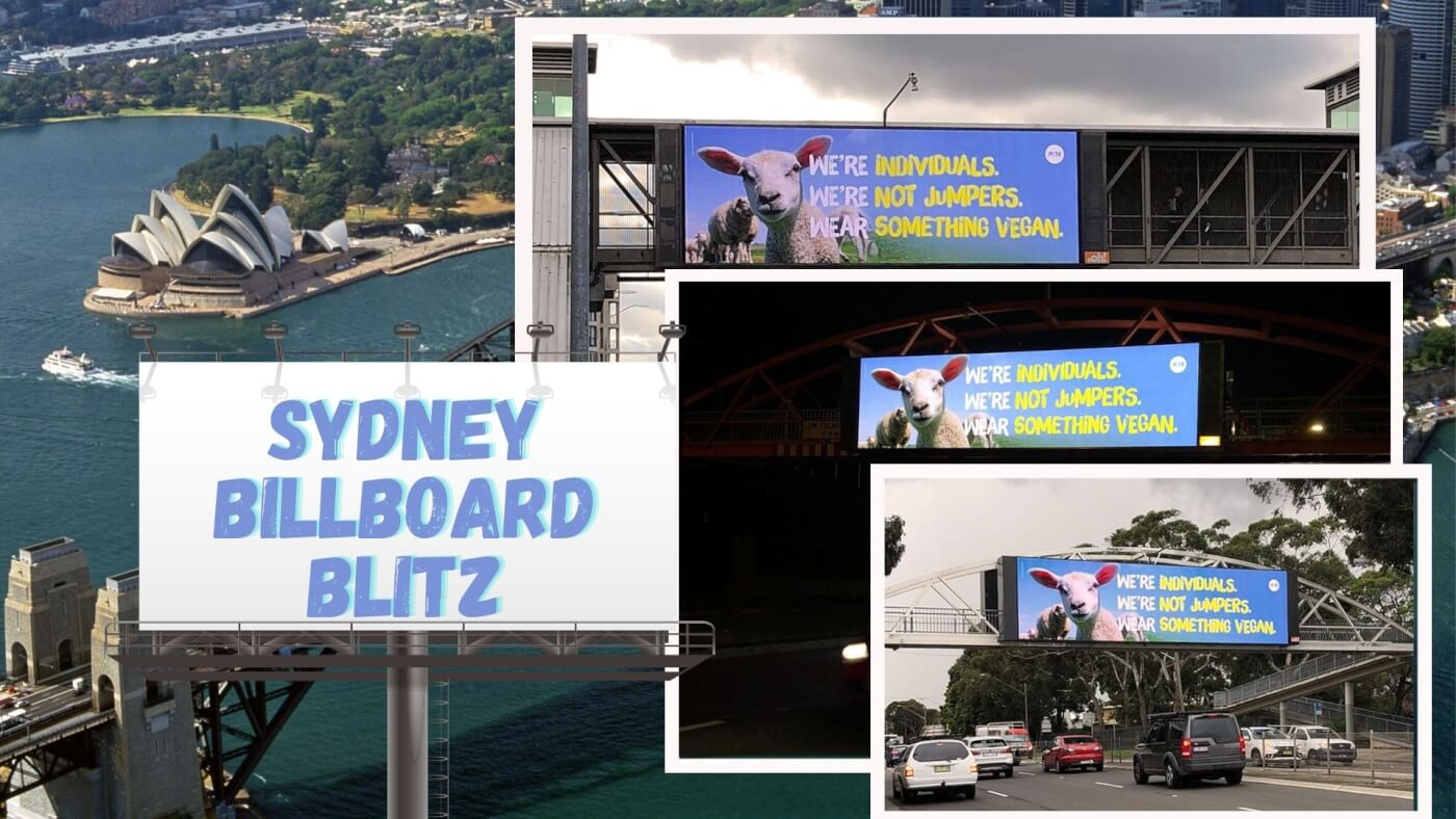 """Billboards around Sydney that say """"We're Individuals, We're Not Jumpers, Wear Something Vegan."""""""