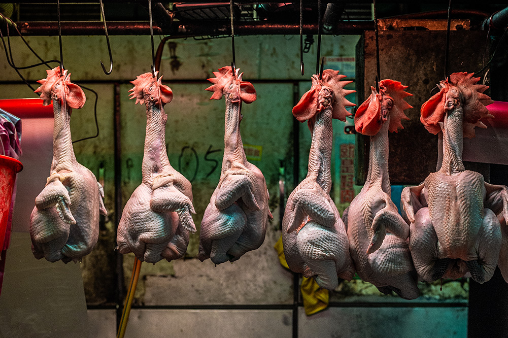 Whole chickens are hooked and hung through their nostrils on display for sale at a Taipei wet market.