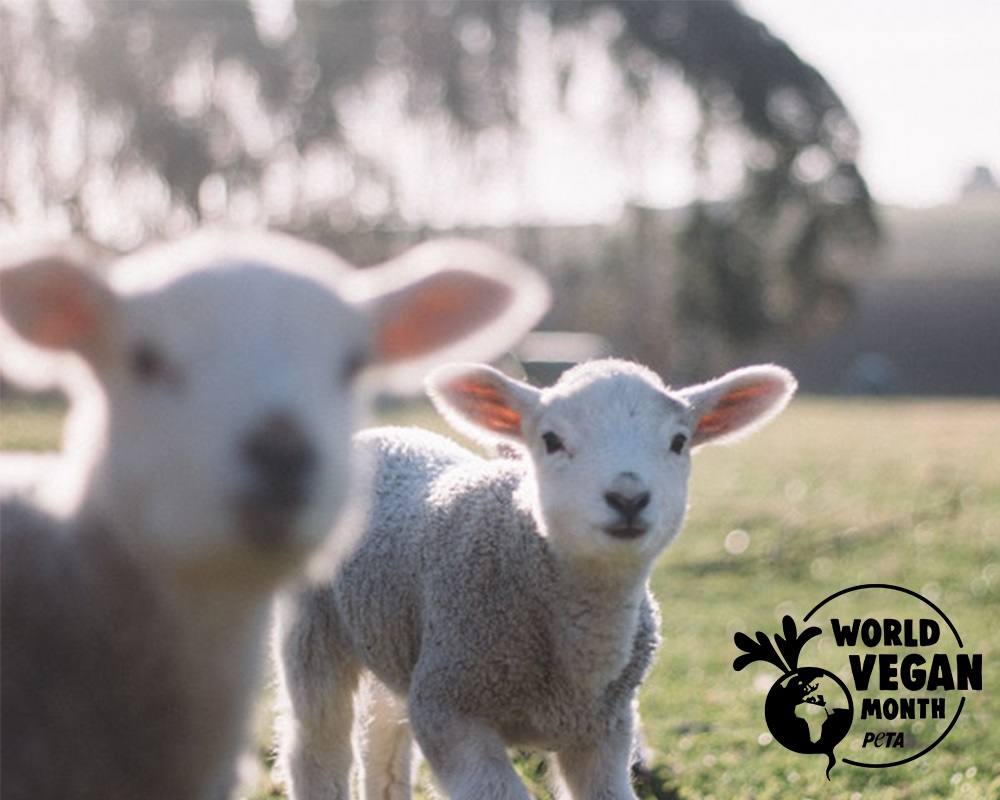 World Vegan Month Starts Soon – Are You Ready?