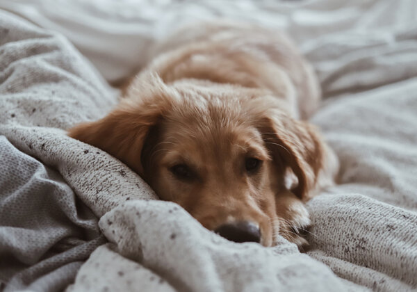 Cruelty-Free Bedding and Where to Buy It