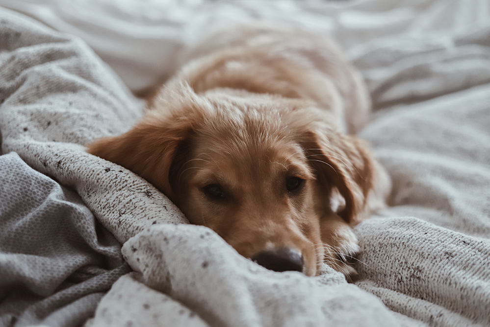 A photo of a dog on a bed.