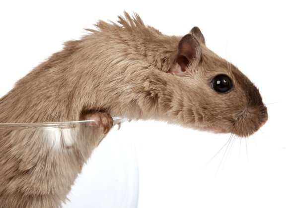 Victory for Mice! The University of Adelaide Ends Forced Swim Test on Animals
