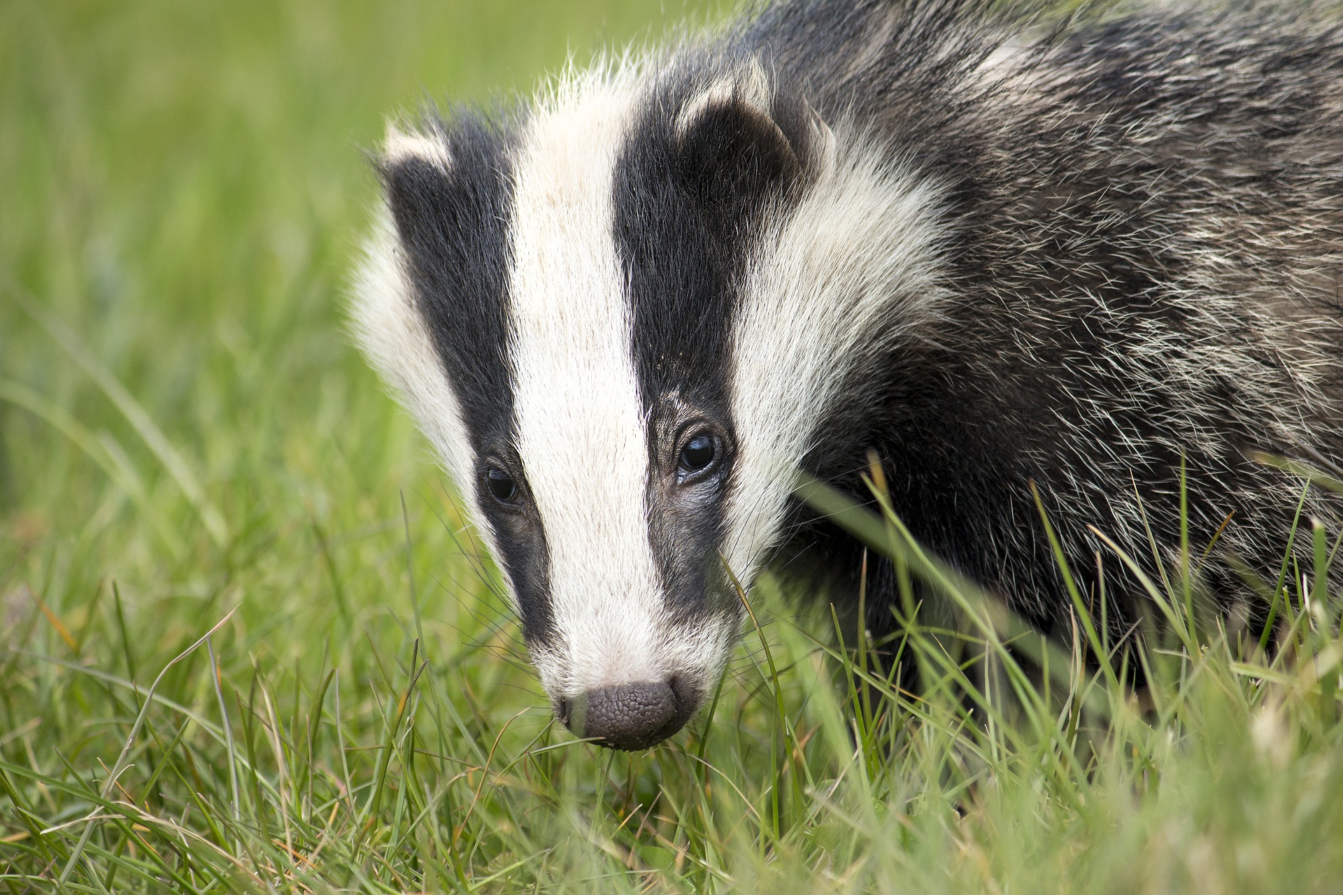 VICTORY! Priceline Ditches Badger-Hair Brushes Following PETA Exposé