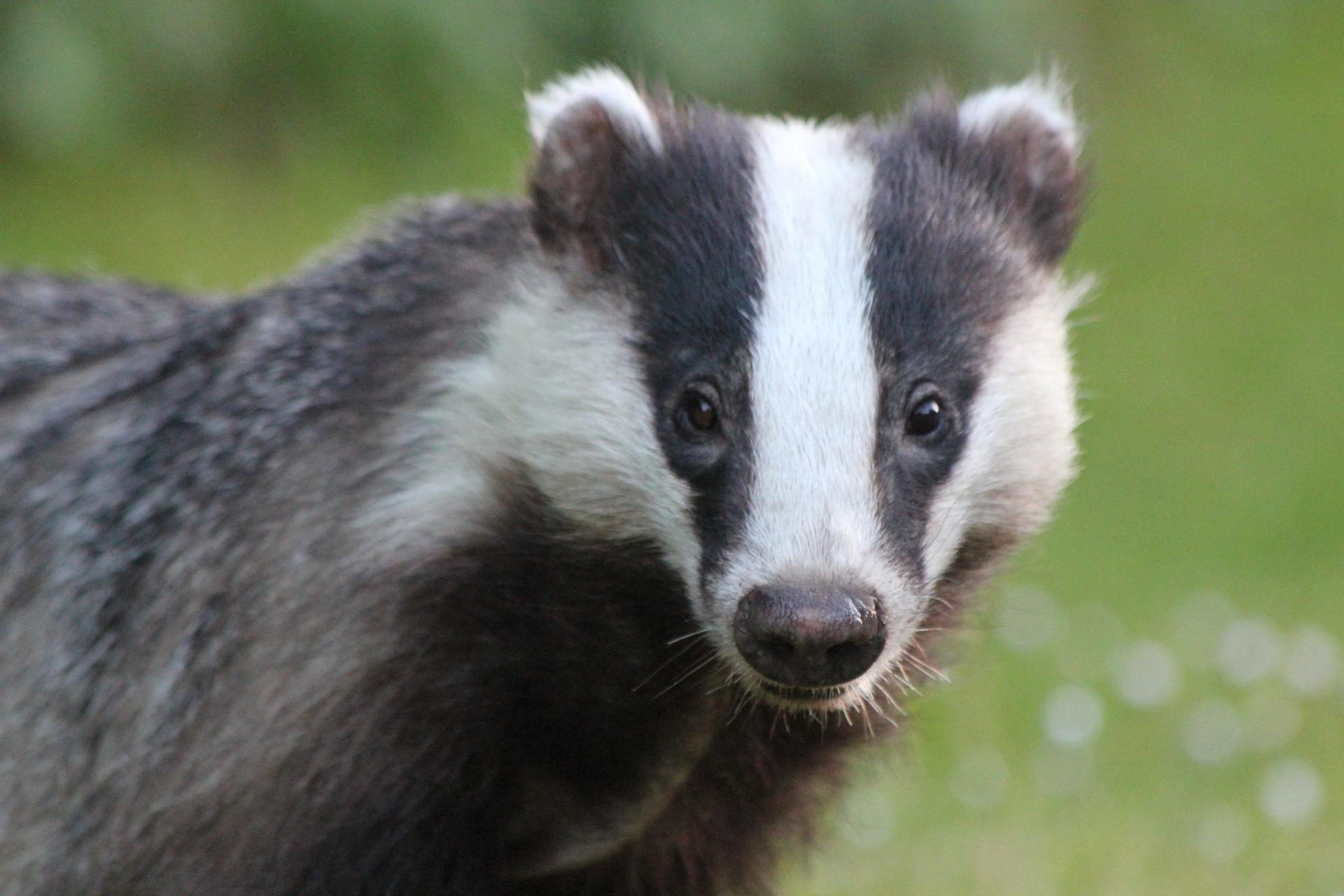 Victory! Beauty Brand Morphe Bans Badger-Hair Make-Up Brushes