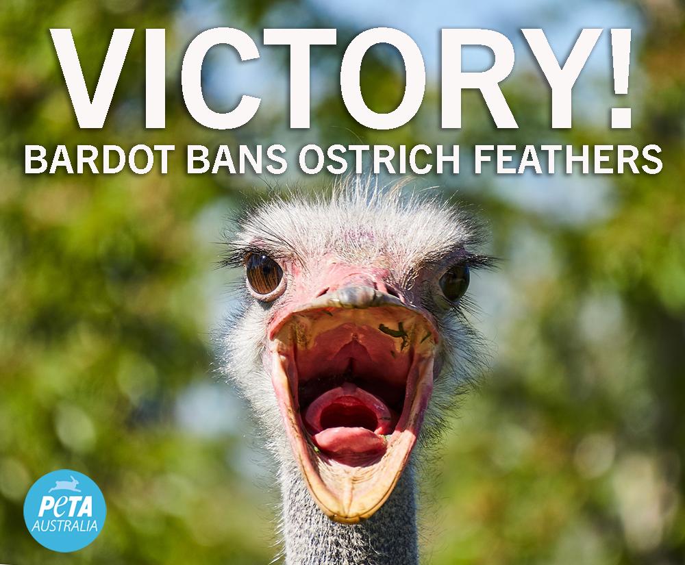 Bardot bans ostrich feathers!