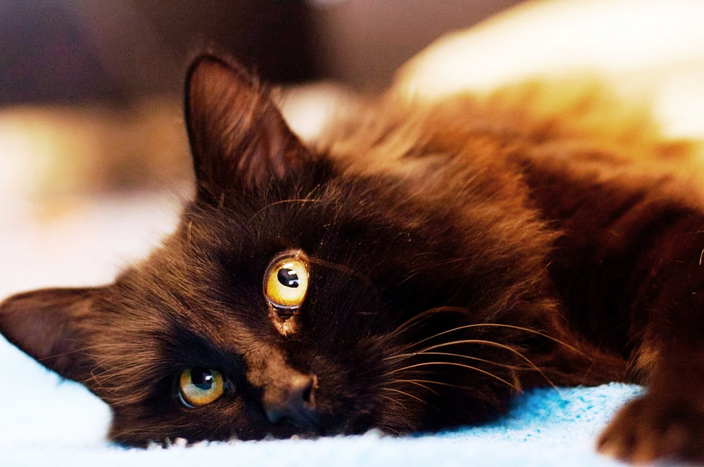 Wagga Wagga Cat Torture Case Prompts PETA Billboard