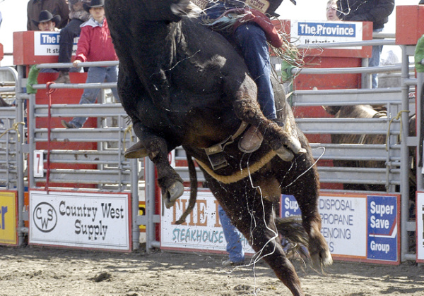 What's Wrong With Rodeos?
