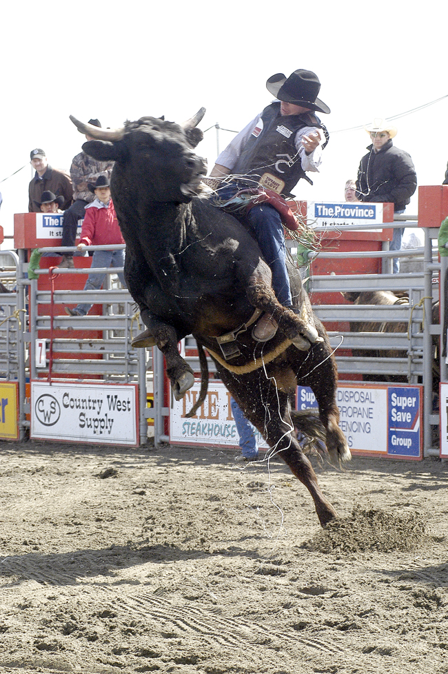 Bull Forced to Buck at Rodeo
