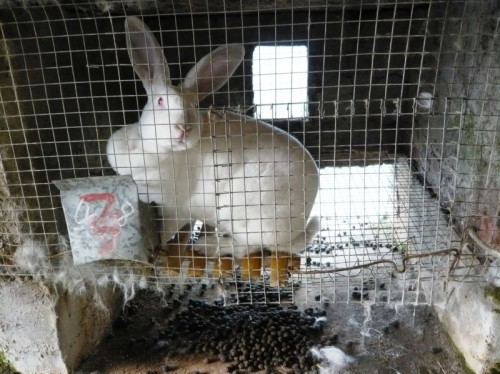 Animals Suffer on Fur Farms
