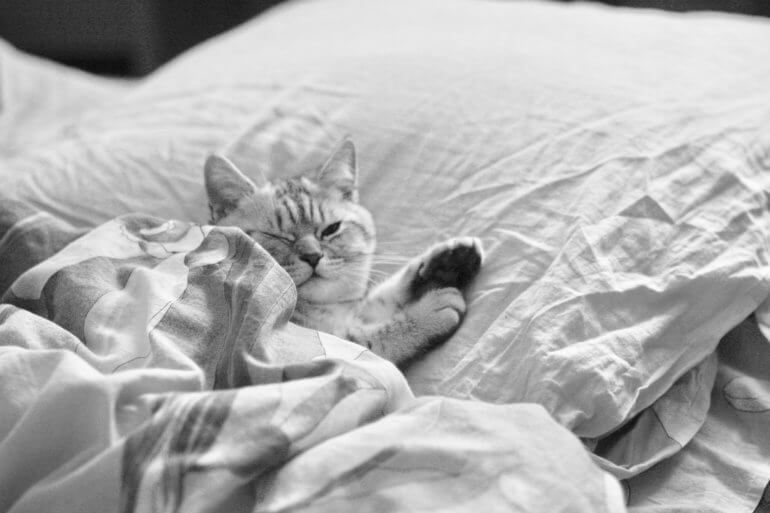 Image shows a cat on a bed.