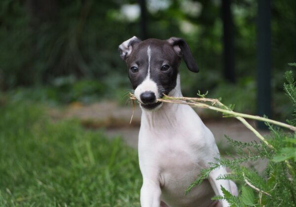 Can Dogs and Cats Be Vegan?