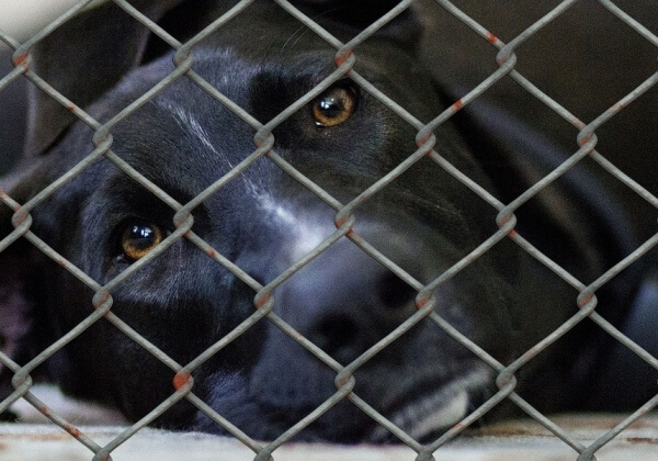 How Breeders Kill Shelter Animals' Chances