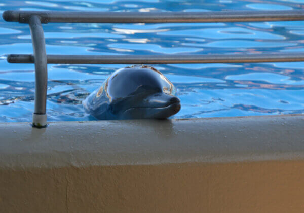 Dolphins Don't Belong in ABUSEment Parks – Help Free Them Now!
