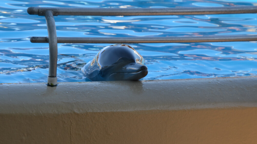 dolphin in a tank at Dolphin Marine Conservation Park in NSW