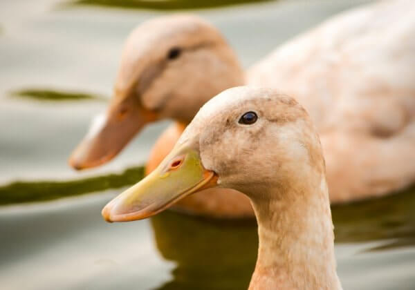 VICTORY! Melbourne Restaurant Shown on 'The Block' Drops Foie Gras