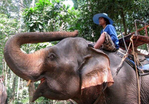 TAKE ACTION: Elephants Forced to Give Tourists Rides Are Beaten and Bullied