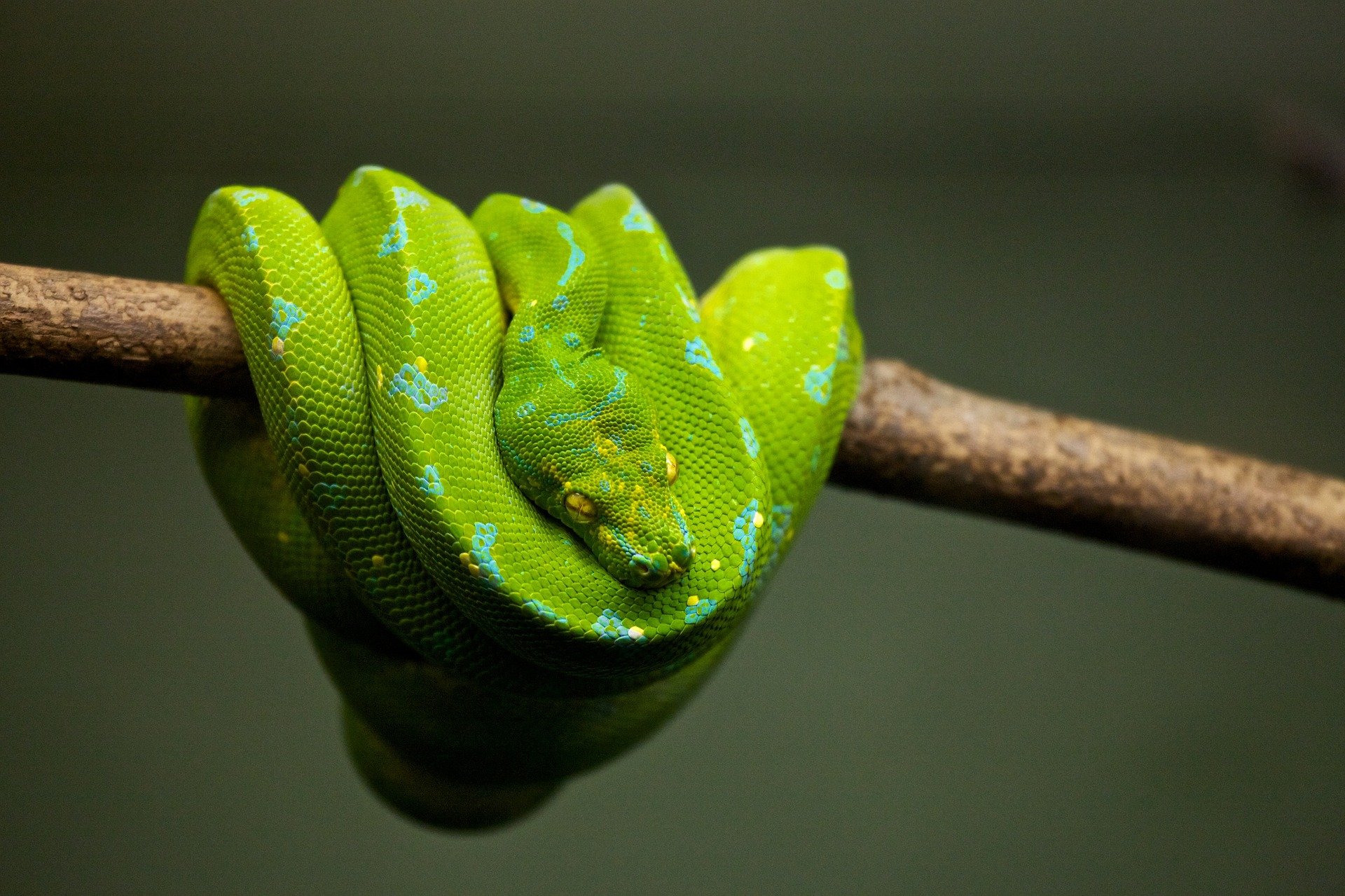 A photo of a green snake.