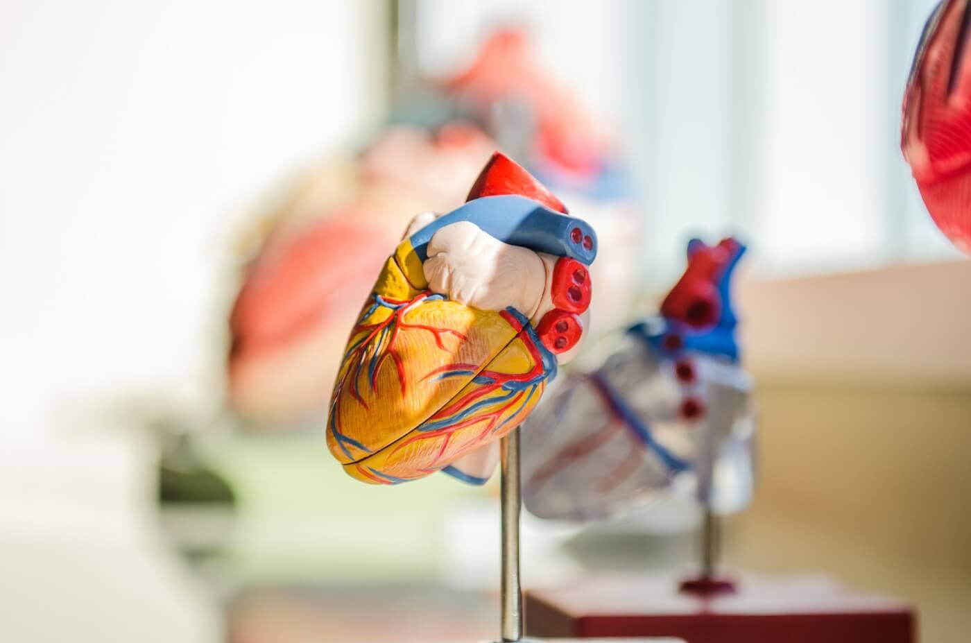 Vegans have better heart health.