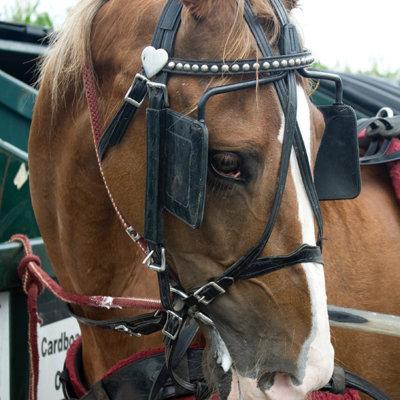A saddled horse