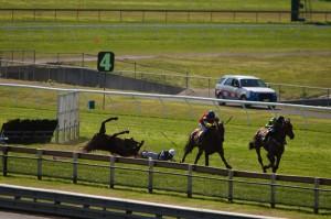Horse fall jumps racing