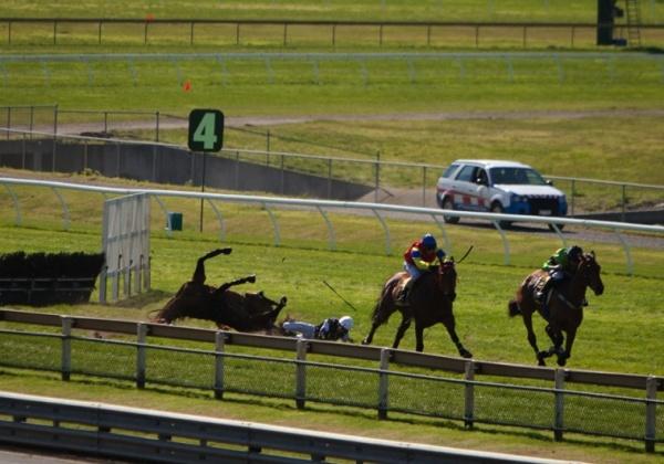 Australia: Ban Cruel Jumps Racing Now!