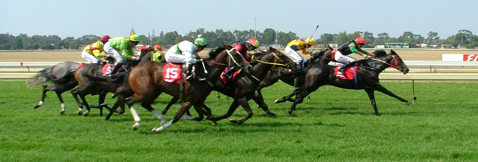 horse-sxchu-standard-restrictions.jpg (1668×567)