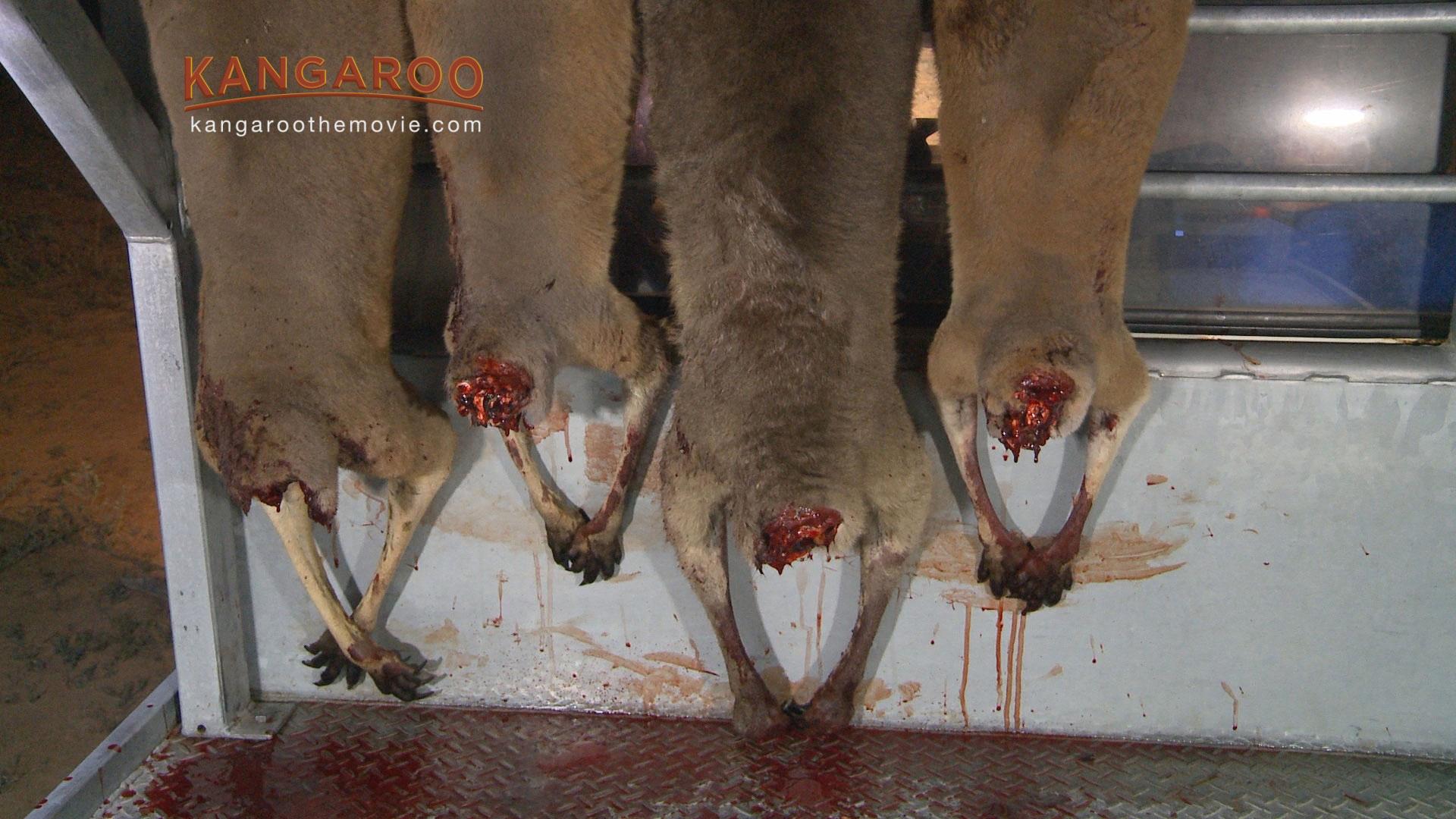 A photo of decapitated kangaroos.
