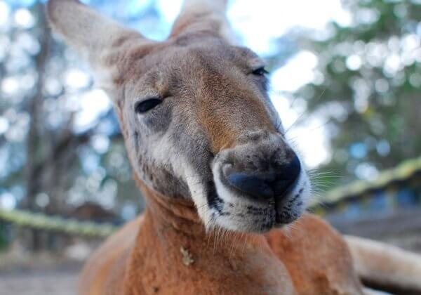 21 Animal Snaps That Will Make You Wish You Lived in Australia