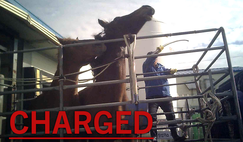 A photo from PETA's exposé of Korea's horse slaughter industry.