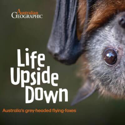 Life Upside Down.