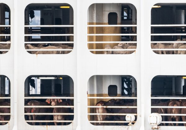Urge Your MP to Speak Up Against Live Export