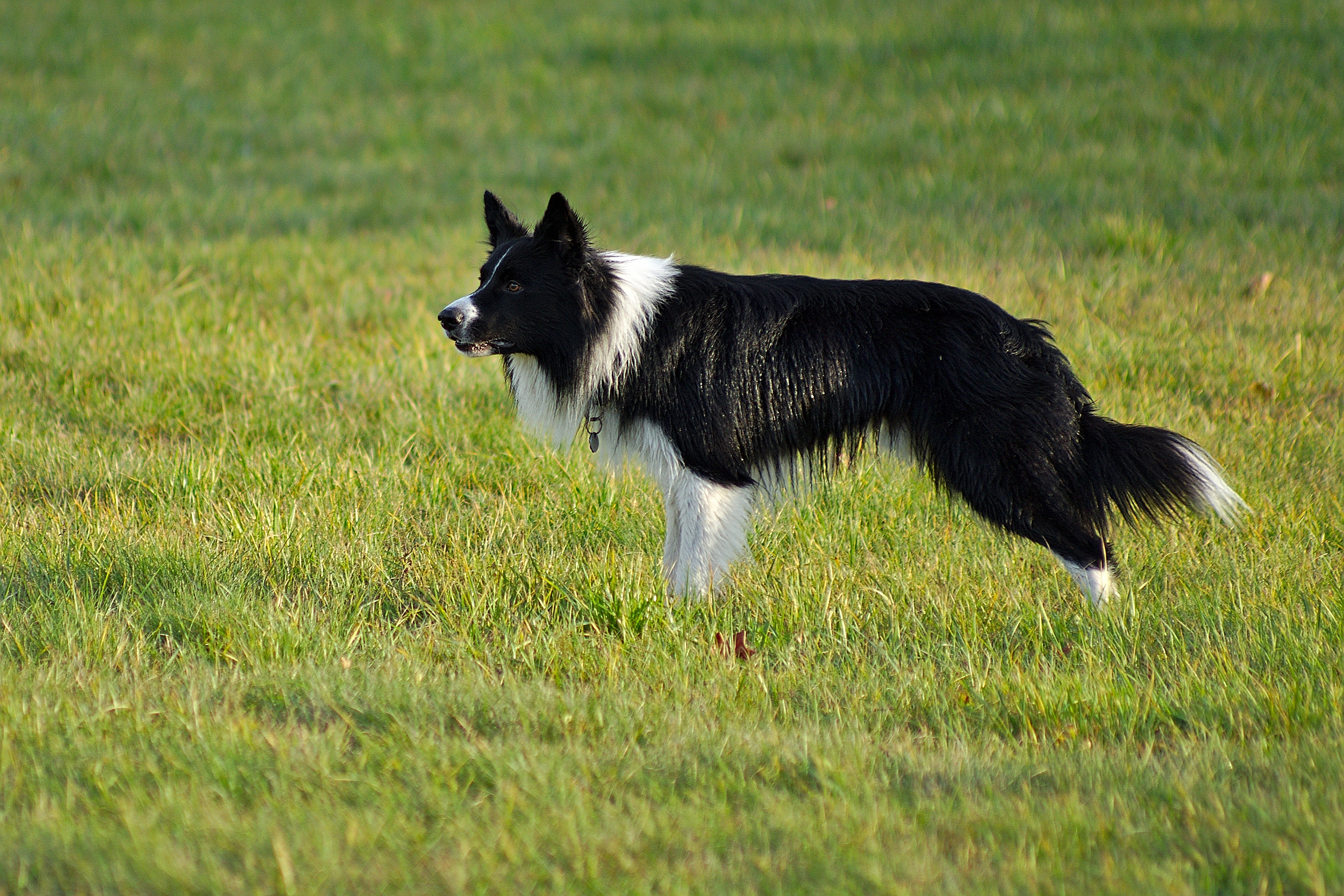 Farm Dogs Dumped As Farmers in Drought Look to Cut Costs