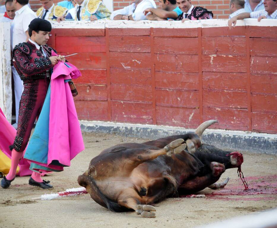 Bullfighting Torture Is Not Culture Animals Used For Entertainment Issues Peta Australia