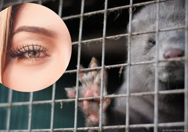 Ask  Lilly Lashes to Stop Selling Mink-Fur Eyelashes