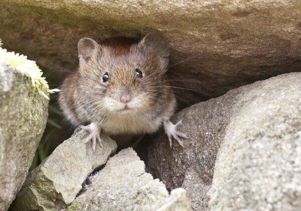 PETA's Position on Poisoning Mice
