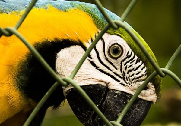 Exotic Animals Are Not 'Pets'