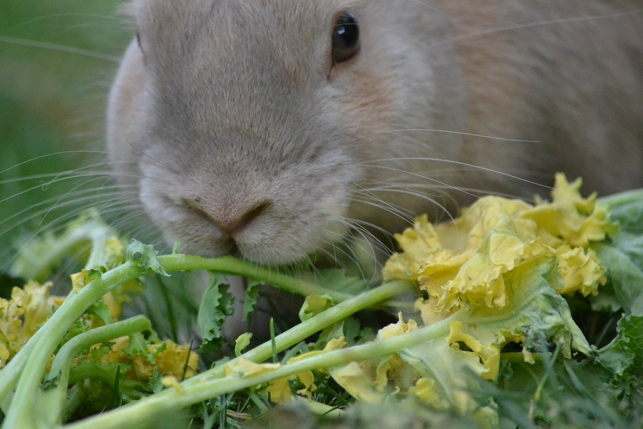 Rabbit with kale