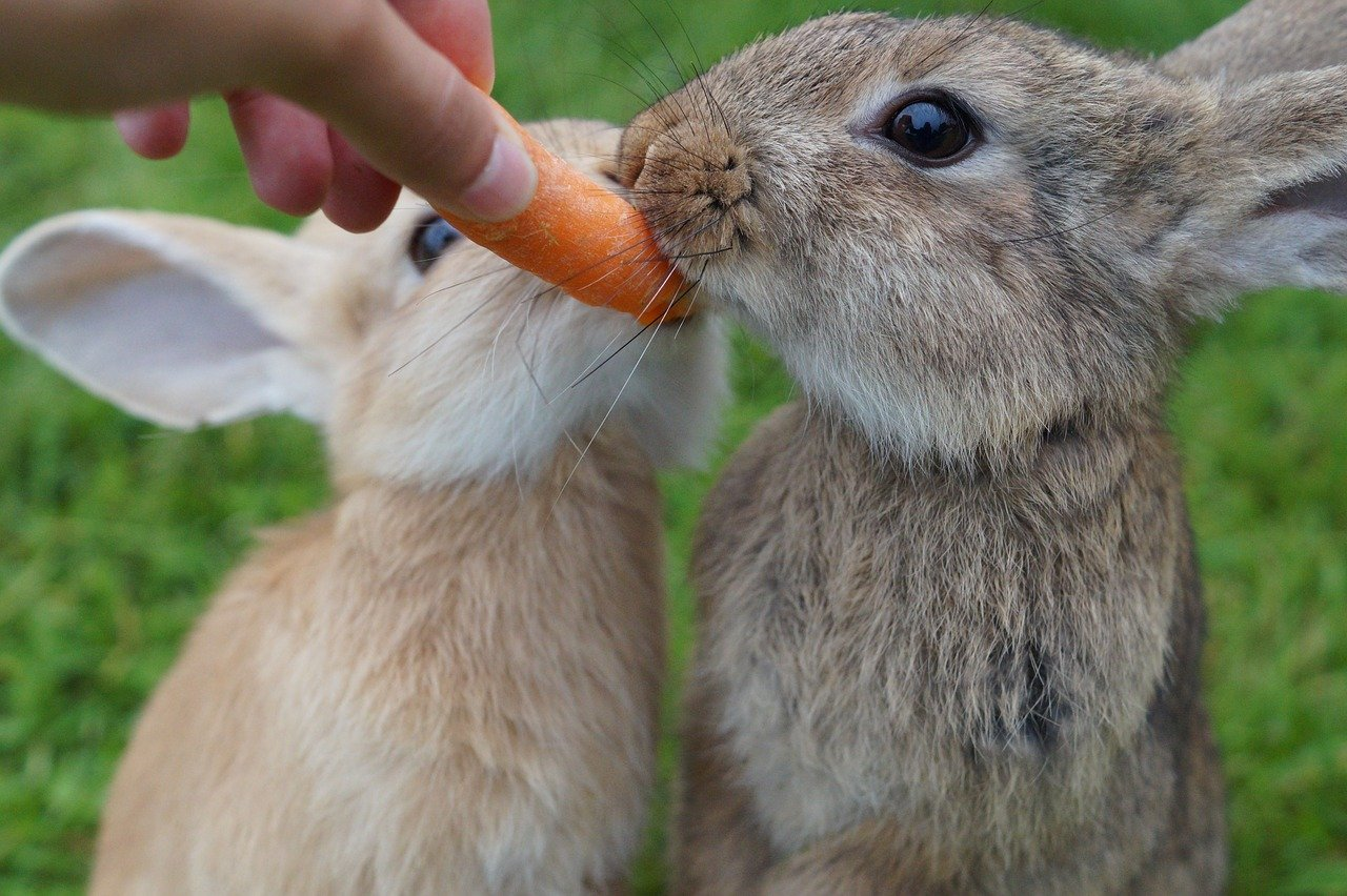 Avocado Cereal Other Foods You Should Never Feed Rabbits Peta Australia