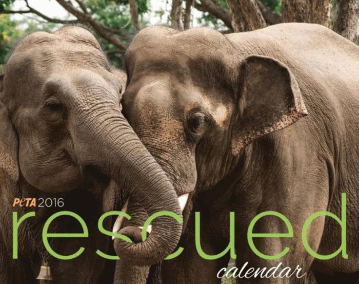 PETA Rescued Calendar 2016