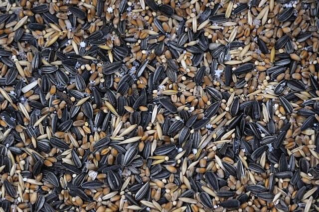 bird seed