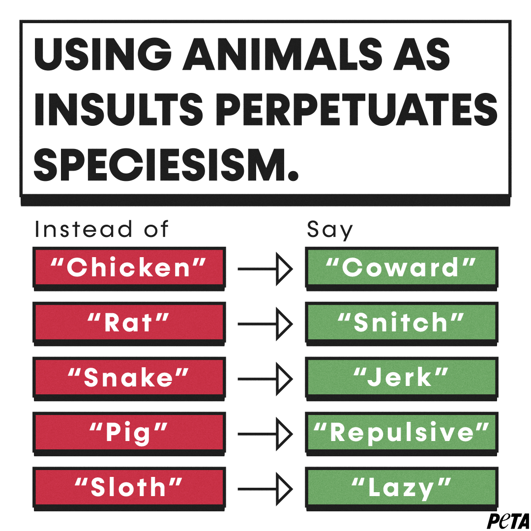 """Say """"coward"""" instead of chicken, """"snitch"""" instead of rat, """"jerk"""" instead of snake, """"repulsive"""" instead of pig, and """"lazy"""" instead of sloth."""