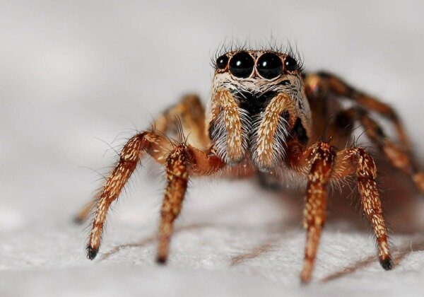A photo of a spider.