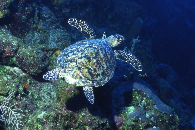 Remind Campbell Newman of His Pledge to Spare Turtles and Dugongs