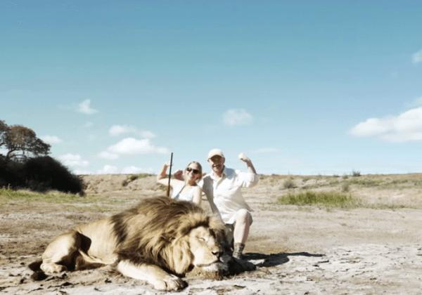 """""""Leaked Video"""" Shows Lion Get Revenge on Trophy Hunter"""