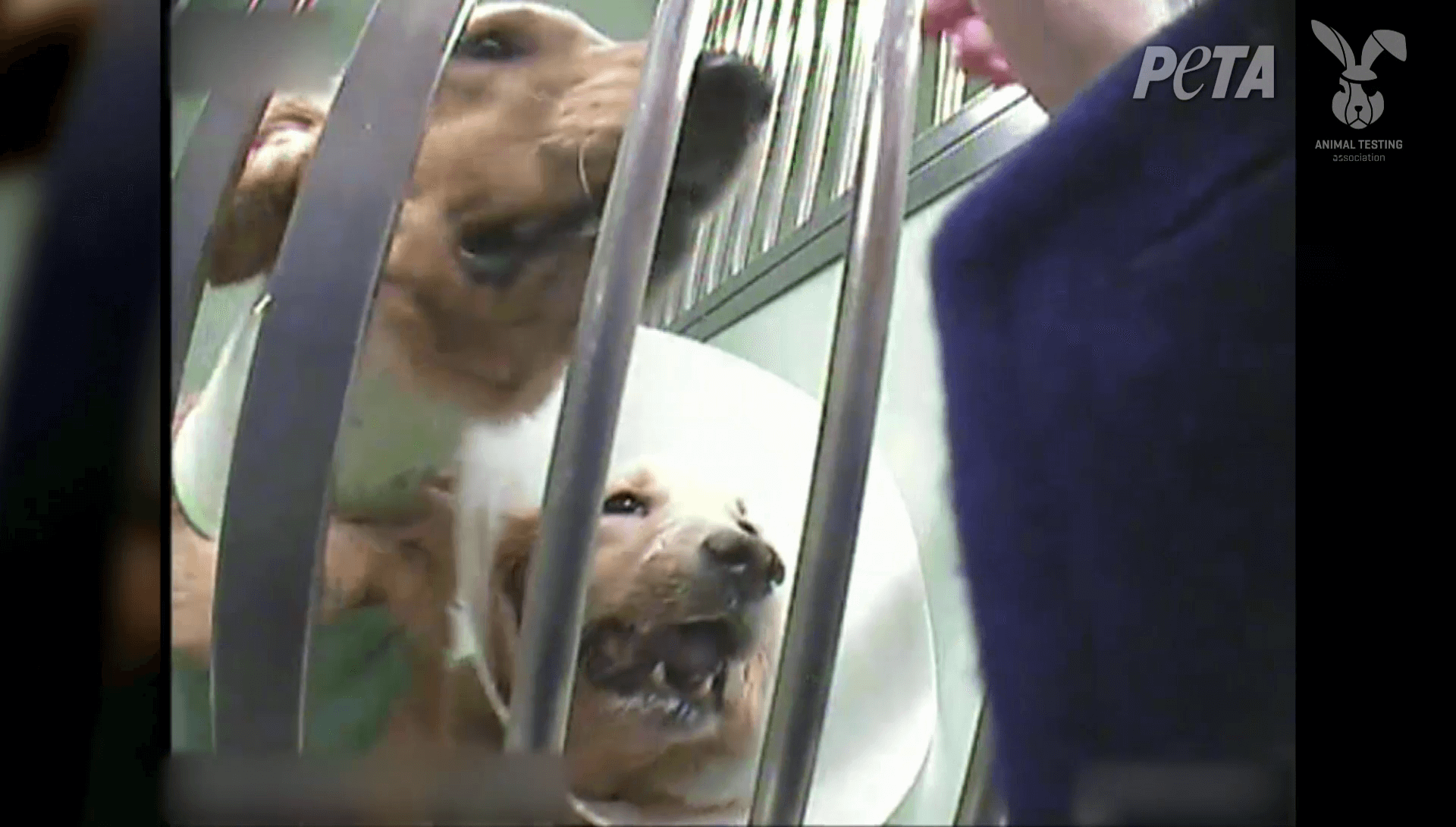 Urge French Charity to Stop Funding Cruel Experiments on Dogs!