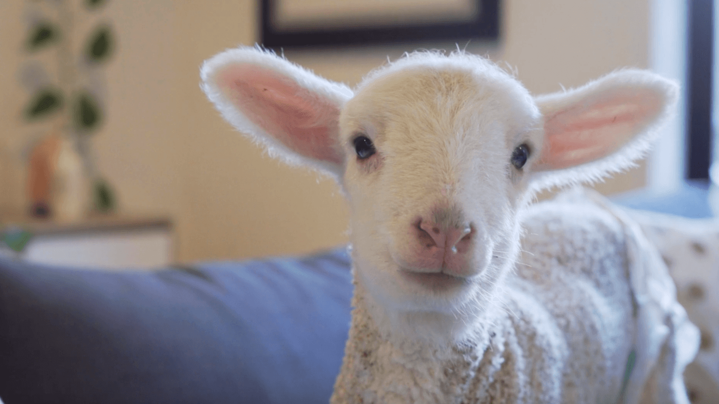 This New Fashion Documentary Will Make You Rethink That Wool Jumper